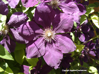 Image: Purple Flower in Taos, new mexico Summer 2005