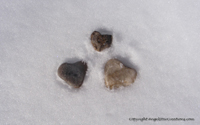 Image: Heart-shaped stones in the snow - great for Valentine's Day!